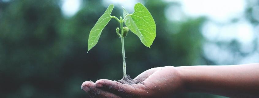 Sostenibilidad. Mano sosteniendo brote de planta