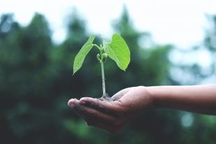 Planta joven sobre la palma de una mano